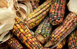 Mais - Glutenfreies Getreide